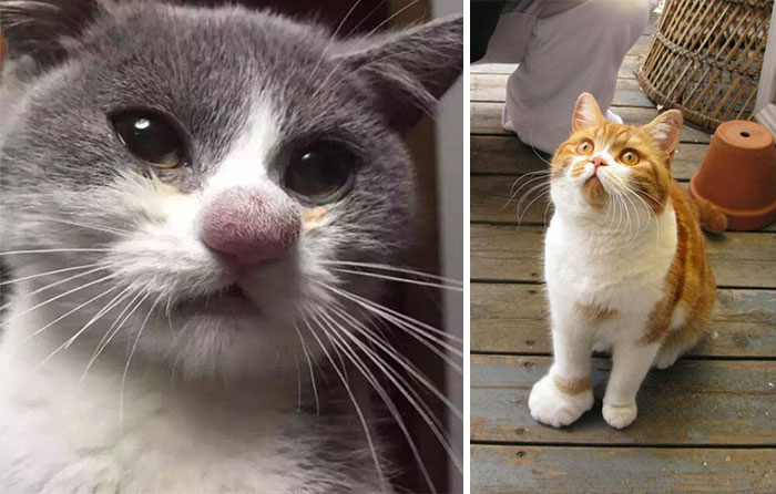 37 Cats Who Got Stung By Bees And Wasps