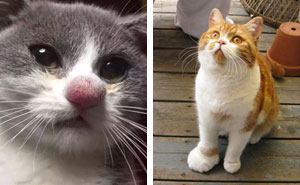 10+ Cats Who Got Stung By Bees And Wasps