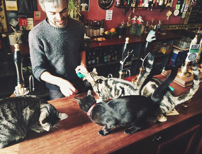 cat-pub-bar-bag-of-nails-bristol-uk-29