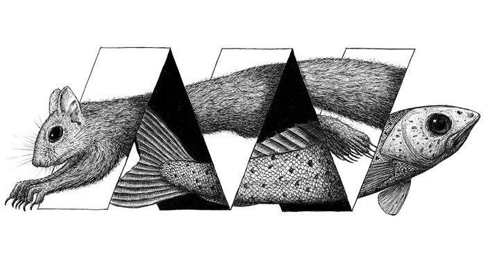 I Draw Optical Illusions Featuring Different Animals