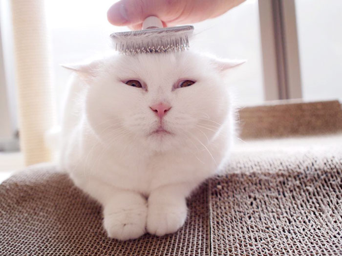 This 17-Year-Old Cat Is The Laziest Internet Star In Japan
