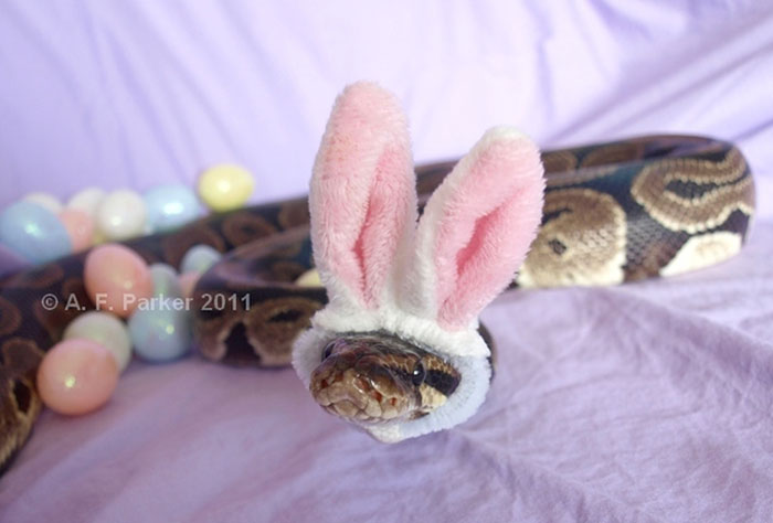 ITT: Cuteness!!!!  Cute-snakes-wear-hats-110__700