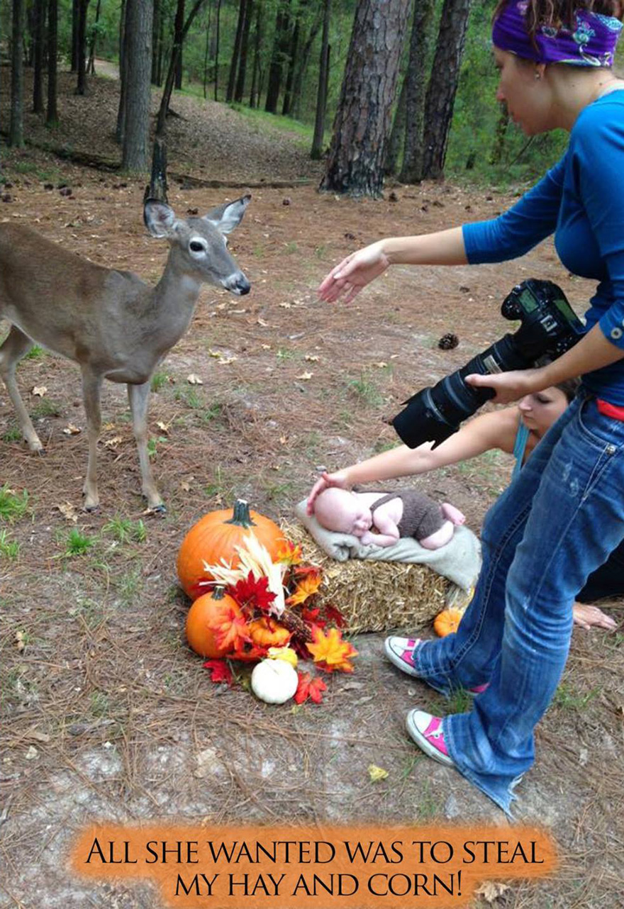deer-photobombs-baby-photoshoot-maggie-connor-megan-rion-2