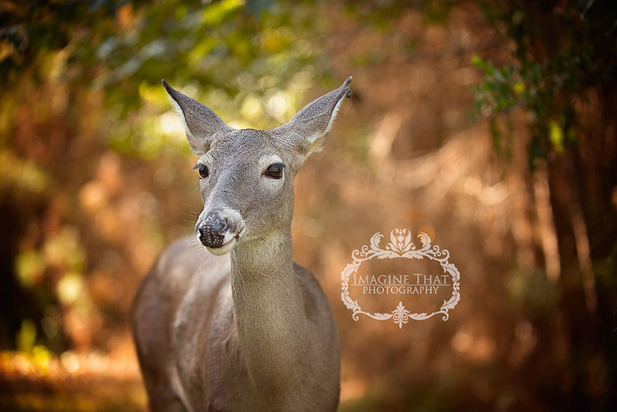 deer-photobombs-baby-photoshoot-maggie-connor-megan-rion-4