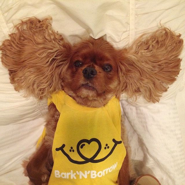 dog-borrow-rental-app-barknborrow-22