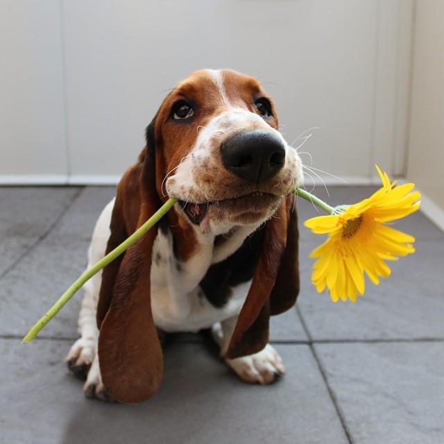 dog-borrow-rental-app-barknborrow-30