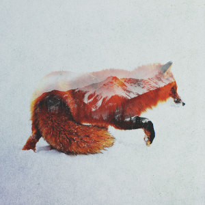 Double Exposure Portraits Of Wild Animals That Reflect Their Habitat