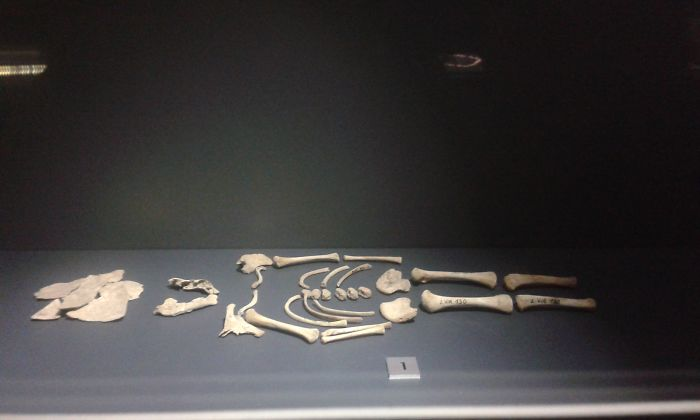Exhibtion Photos Of Human Skeletons 10, 000 Years Old