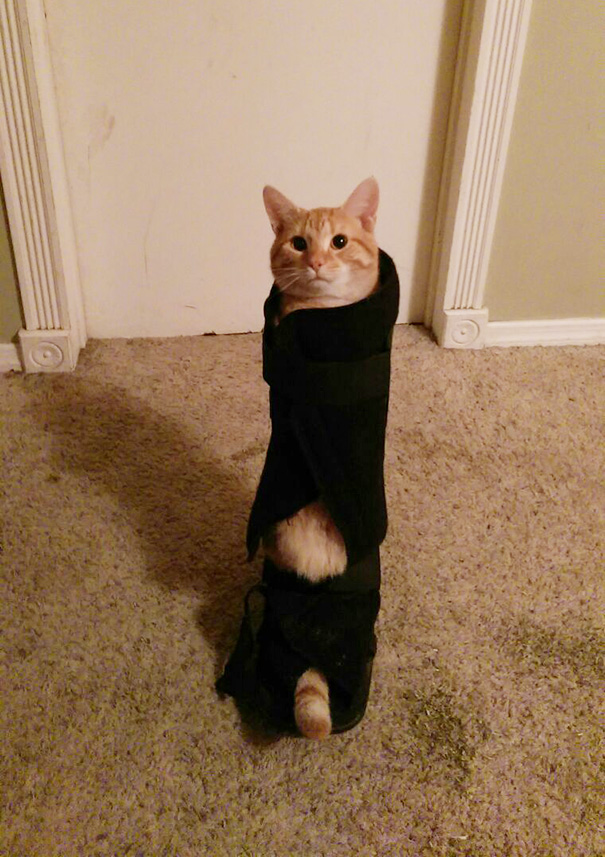 Ceiling Cat Made The Mistake Of Crawling Into My Walking Cast