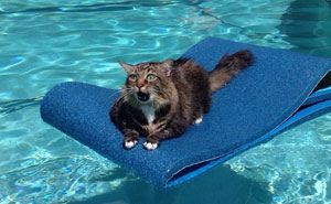 20+ Cats Who Immediately Regretted Their Poor Life Choices