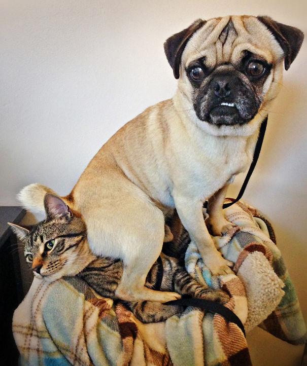 I Don't Always Sit On Cats, But When I Do I Sit On Miles