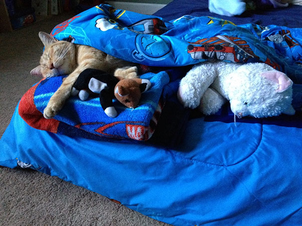 """It's Been Almost A Year Since We Took In The Neighborhood Stray And My Son Still Insists On Tucking Him In When He Naps """"so He Knows That He Lives At Our House And Will Come Back."""""""