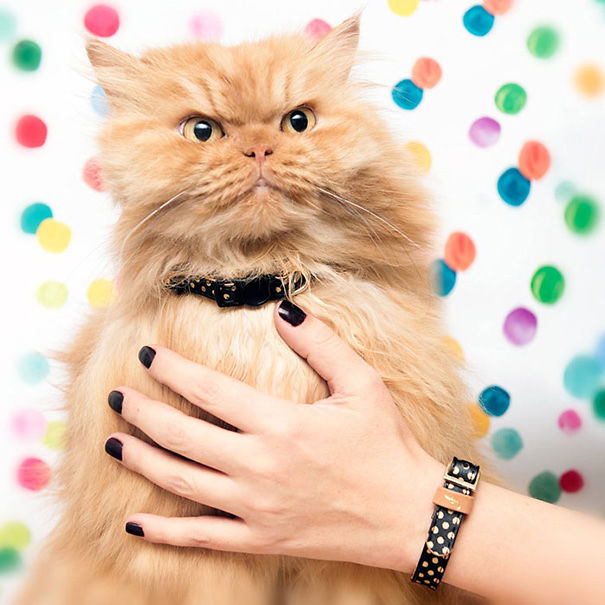 Matching Friendship Bracelets For You And Your Cat