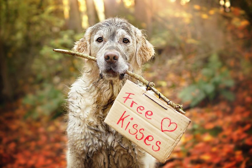 [adv] I miss my community I-love-my-golden-retriever-when-he-is-muddy-16__880