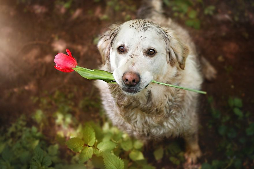 I Love My Golden Retriever When He Is Muddy | Bored Panda