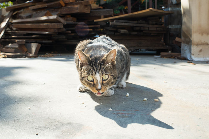 I Photograph Community Cats In Los Angeles