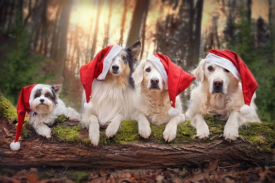 enjoying my holiday Ten tips for enjoying the holidays follow these 10 tips to make the most of your holiday season your feelings about the holidays are very personal they can cause us to feel happy, sad or ambivalent the holidays can also cause stress because of.