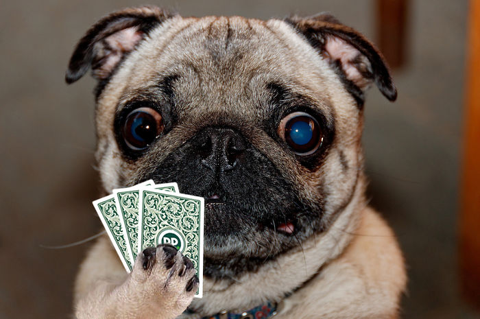 I Played Poker With My Pets And Lost