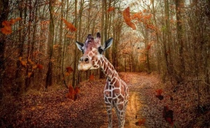 I Used My Iphone To Create A Way For This Giraffe To Leave The Zoo