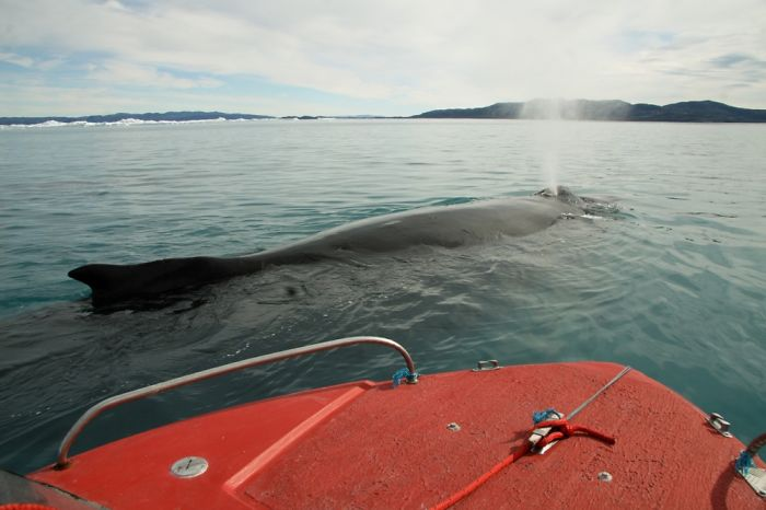Chill Out With Whales