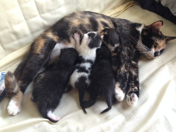 Tortieco And Her 4 Babies.