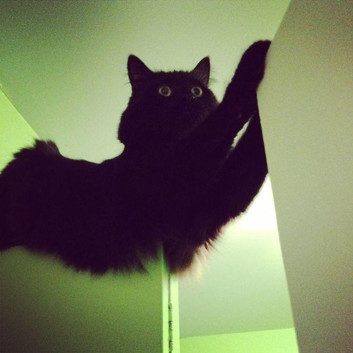 Bridge Cat