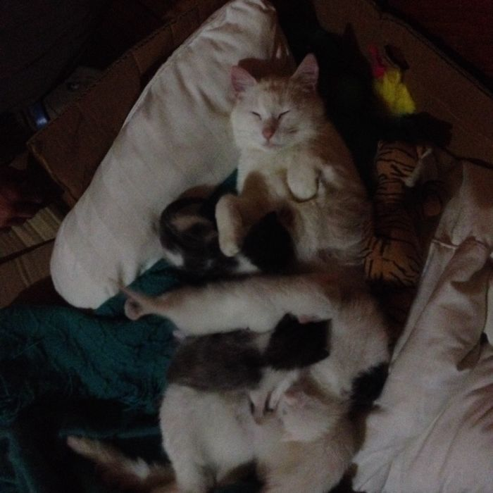 Happy Mom And Her 4 Kittens