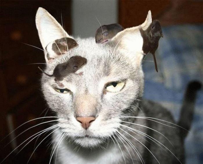 Idiot Cat Says Durrrr