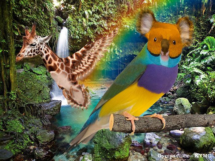 Birdala And Humaffe