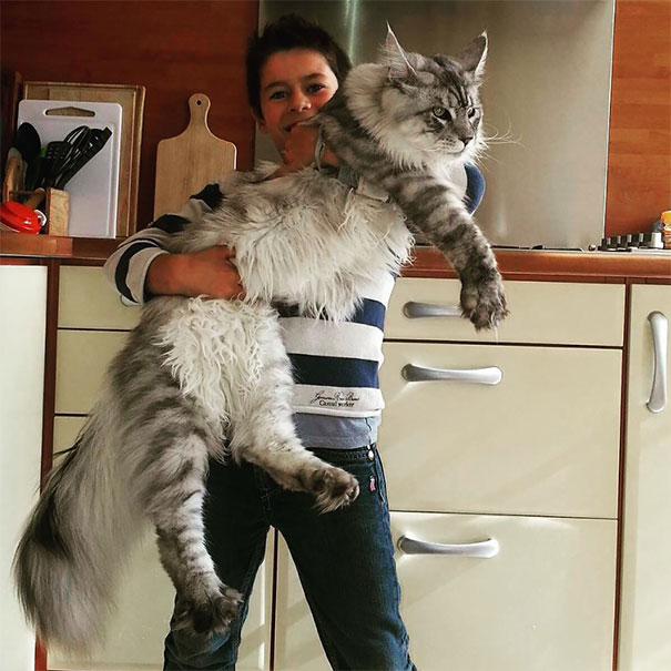 Giant Kitty