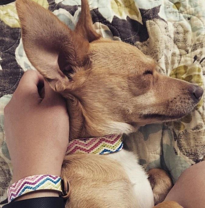 matching-pet-collar-bracelet-friendship-collar-16