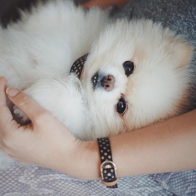 matching-pet-collar-bracelet-friendship-collar-5