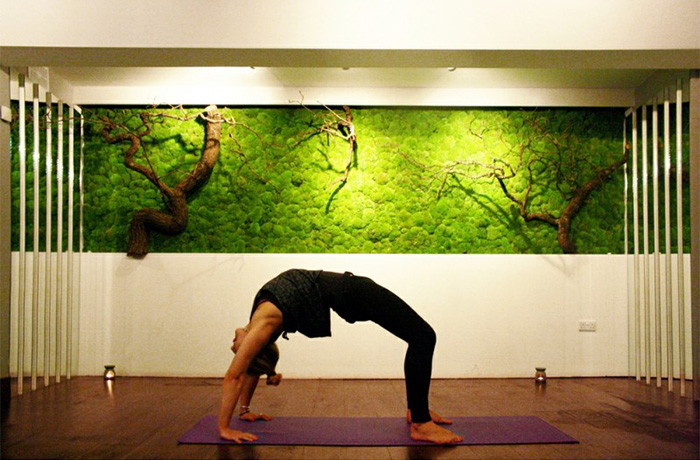 Moss Wall In Yoga Studio
