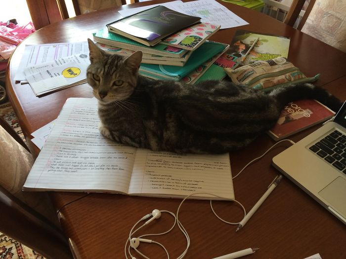 My Cat Refused To Let Me Study For An Exam The Next Day