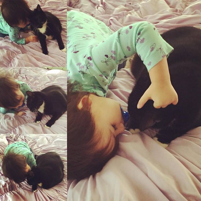 My Baby Girl And Our Friend's Cat. They Hit It Off Immediately.