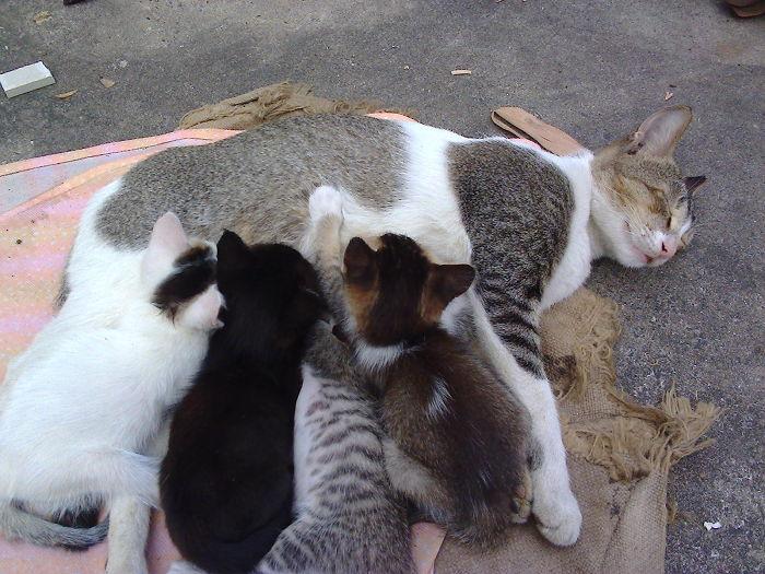 My Cat Family