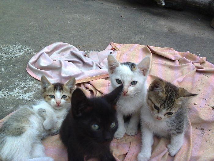 Soft Kitty Warm Kitty Little Ball Of Fur…