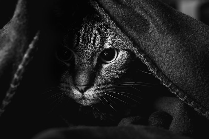 Photographing Cats Helps Me Deal With My Insecurity And Dark Past
