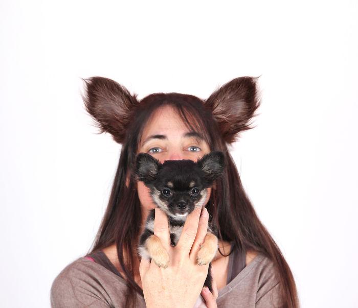 Pixel & Pebbles: My Chihuahuas Having A Blast In The Photo Studio