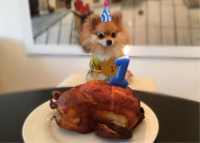 Pom Pom Chewy Celebrates His Birthday With 27 Thousand Of His Closet Friends!
