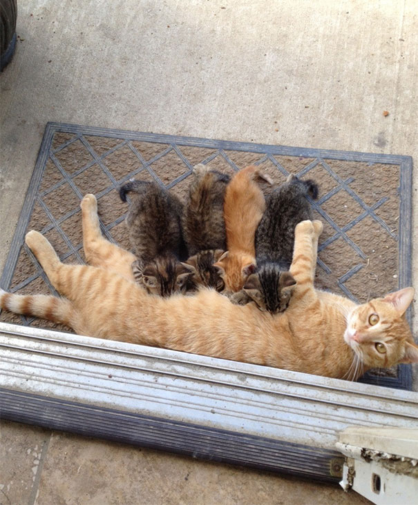 My Friend's Cat Recently Had Kittens, And The Mother Stopped Taking Care Of Them. We Found The Father Like This Today