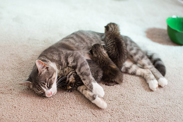 Momma Cat Who Lost Her 3 Kittens United With 3 Abandoned Kittens Who Needed A New Mom
