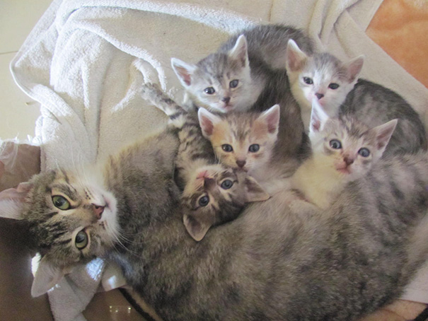My Cat And Her Five Kittens