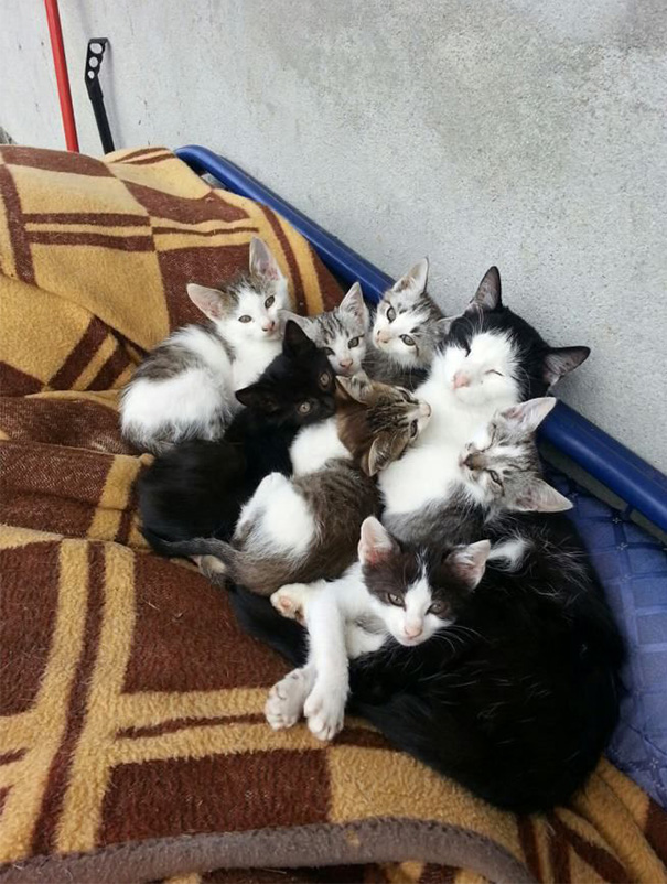 The Most Amazing Cat Family I Ever Saw