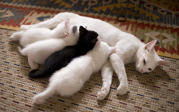 Mother Cat With Her Kitties