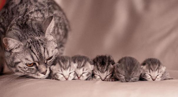 Resultado de imagen para cat and kitten