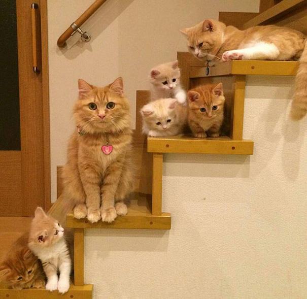 Kitteh Family Pic