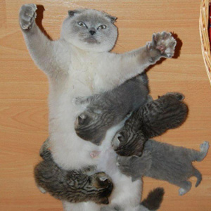 20+ Proud Cat Mommies With Their Kittens