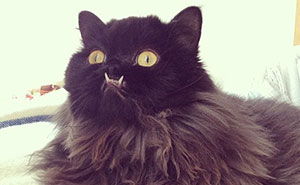 Meet Princess Monster Truck, A Poor Cat That Was Rescued From The Streets