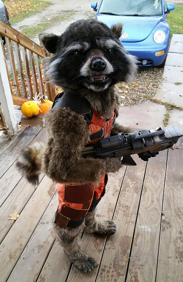 rocket-raccoon-costume-diy-mom-halloween-chase-borchardt-1